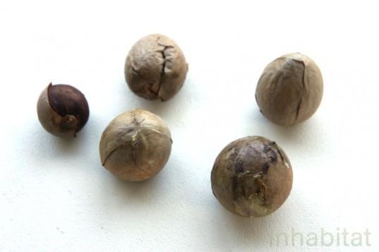 Φυτέψτε το δικό σας φυτό αβοκάντο από ένα κουκούτσι, φωτογραφία-1