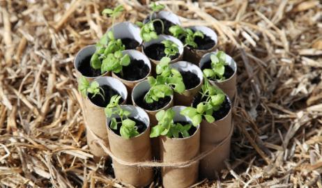 Καλλιεργείστε απεριόριστη ποσότητα βασιλικού από ένα μόνο φυτό