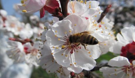 Ποιοι είναι οι κίνδυνοι που παραμονεύουν από τη μείωση των μελισσών;