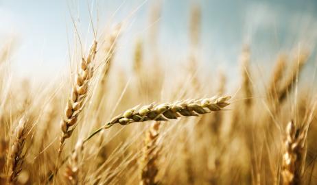 Τα δημητριακά και το ψωμί των αρχαίων Ελλήνων