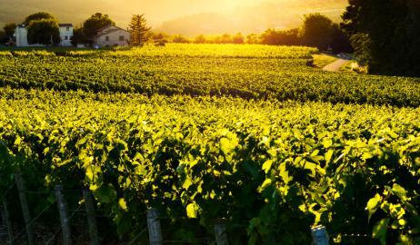 Beaujolais Nouveau, ένα κρασί που πίνεται φρέσκο