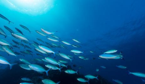 Οι πληθυσμοί των ψαριών μπορεί να ανακάμψουν σε 10 χρόνια