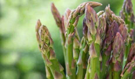 Σπαράγγια ένα αριστοκρατικό λαχανικό