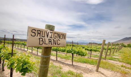 Sauvignon Blanc μια ποικιλία με πλούσια αρώματα