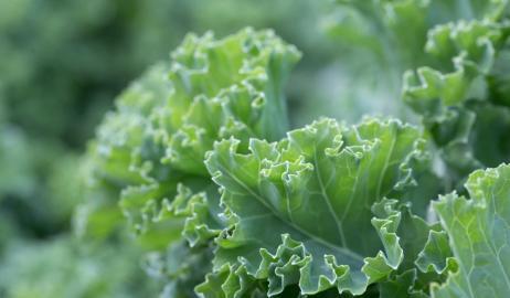Λάχανο Kale, η νέα μόδα στα superfoods