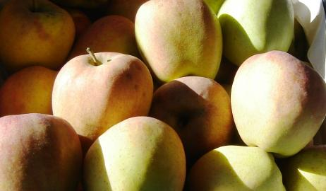Μήλα Τριπόλεως Delicious Πιλαφά