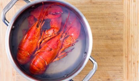 Πονάνε οι αστακοί και οι κάβουρες όταν μαγειρεύονται;