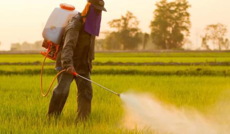 Η προστατευτική δράση της κερσετίνης κατά των φυτοφαρμάκων