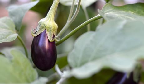 Ποιά φρούτα και λαχανικά δεν χρειάζεται να αγοράζετε βιολογικά