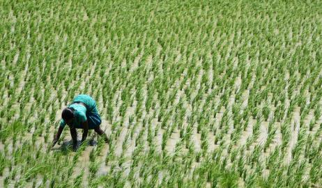 Το 1/5 του παγκόσμιου πληθυσμού εξαρτάται από τις εισαγωγές τροφίμων