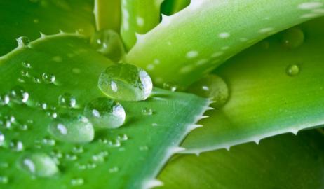 Με κάκτο η νέα μέθοδος καθαρισμού του νερού!