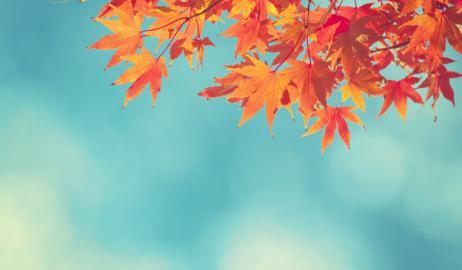 Φθινοπωρινά φύλλα ως χρωστικές τροφίμων