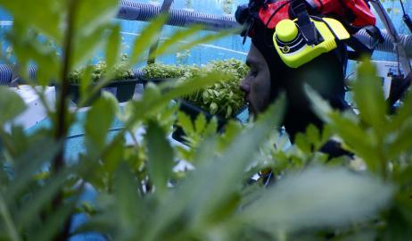"""""""Ο κήπος του Nemo"""": το πολλά υποσχόμενο υποθαλάσσιο θερμοκήπιο"""