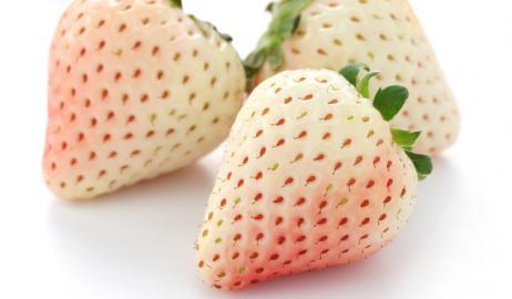 Αλμπίνο φράουλες; και όμως υπάρχουν και κοστίζουν περισσότερο από όσο νομίζετε