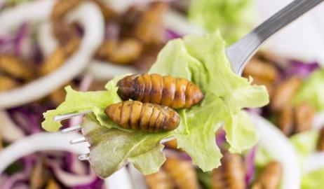 Είναι οι καταναλωτές διατεθειμένοι να τρώνε έντομα για να σώσουν το περιβάλλον;