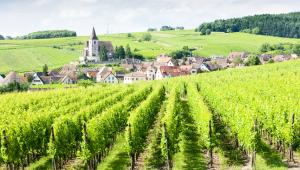 Gewurtztrasminer-Alsatia