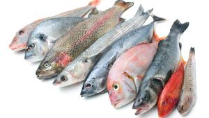 Τοξικός υδράργυρος στα ψάρια