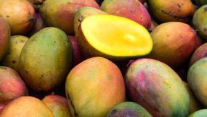 mango-ofeli-karkinos