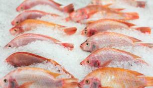 Οι δυο βασικές οδηγίες όταν αγοράζετε ψάρια