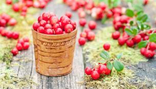 lingonberry-adunatisma