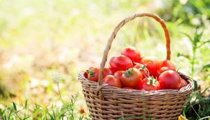 tomata-ofeli