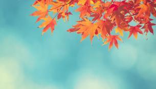 το χρώμα τον φθινοπώρου στα φύλλα των δέντρων