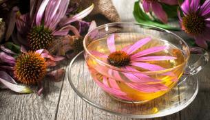 Echinacea, το φυτικό ενισχυτικό του ανοσοποιητικού