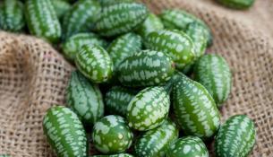 νωρίστε το Cucamelon, το πιο χαριτωμένο φρούτο που θα δείτε ποτέ