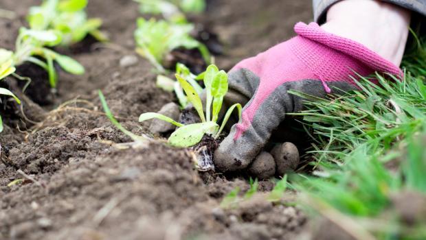 Συμβουλές για τον δικό σας κήπο λαχανικών