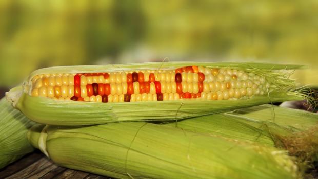 Τα γενετικά μεταλλαγμένα τρόφιμα συνδέονται με την λευχαιμία