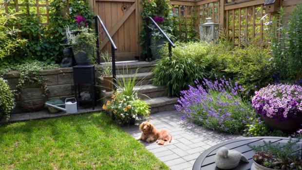Πώς να φυτέψετε λεβάντα στον κήπο σας