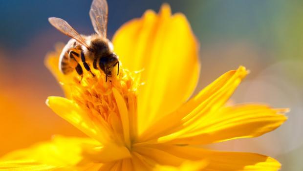 Οι μέλισσες είναι επιλεκτικοί καλοφαγάδες