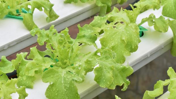 Eνυδρειοπονία, η αειφορική εναλλακτική μορφή καλλιέργειας
