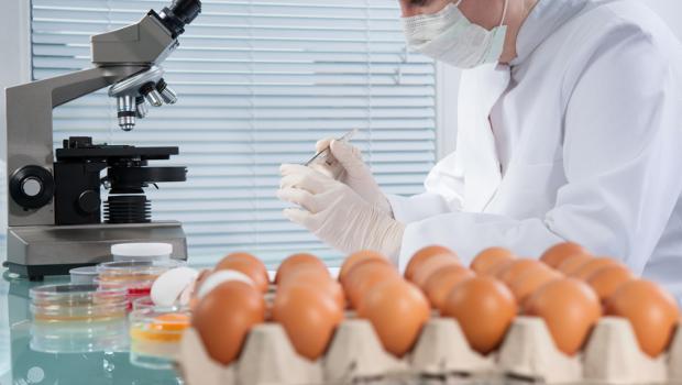 Έξαρση της Σαλμονέλας, η EFSA προειδοποιεί
