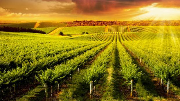 Πώς επηρεάζει η κλιματική αλλαγή το κρασί
