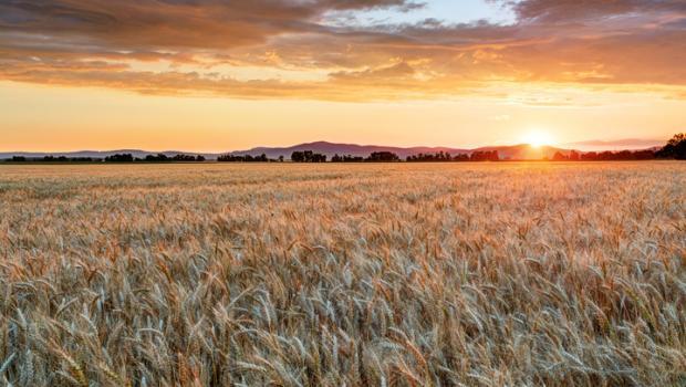 Το αβέβαιο μέλλον της διατροφικής αξίας της τροφής