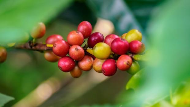 Υποδεχθείτε το αλεύρι από καφέ