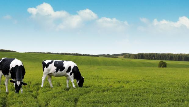 Οι παγκόσμιες διατροφικές και γεωργικές μέθοδοι πρέπει να αλλάξουν για να σωθεί το περιβάλλον