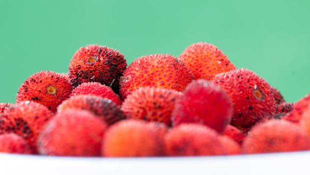 Κούμαρο, το παρεξηγημένο άγριο φρούτο με τις θεραπευτικές ιδιότητες