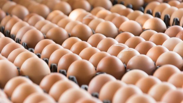 Παγκόσμια ανησυχία: Ανακαλούνται αυγά από γερμανική εταιρεία.