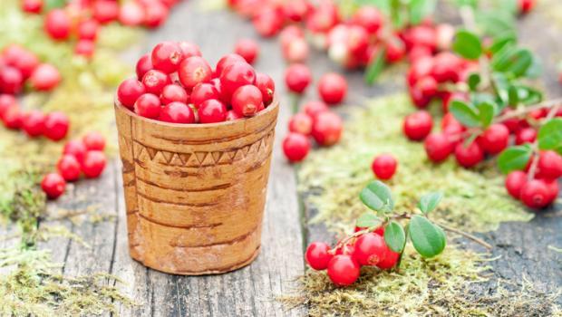 Lingonberries, τα κόκκινα μούρα που καταπολεμούν το λίπος