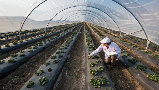 Αγκαλιάζοντας την αειφόρο γεωργία, η μικροσκοπική Ολλανδία έχει εξελιχθεί σε μια γεωργική υπερδύναμη που ταΐζει τον κόσμο