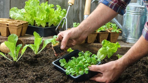 Φυτέψτε λαχανικά, όχι γρασίδι, στον κήπο σας και μειώστε τα αέρια του θερμοκηπίου