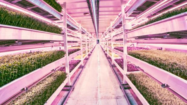 Το υπόγειο κρυμμένο υδροπονικό αγρόκτημα του Λονδίνου