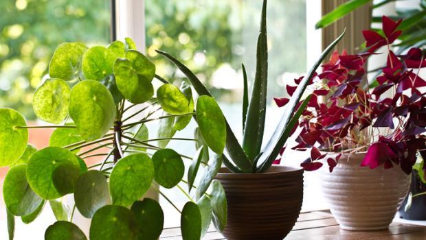 Στο μέλλον, τα φυτά εσωτερικού χώρου θα μπορούν να μας προειδοποιούν για πιθανούς κινδύνους για την υγεία