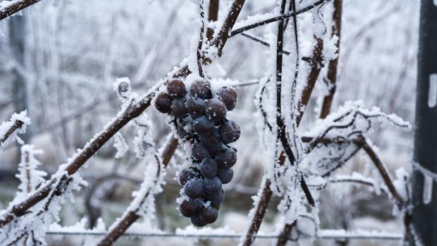 Κρασιά του πάγου που θα ζεσταίνουν το χειμώνα σας