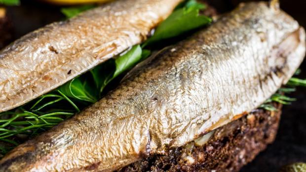 Αποτέλεσμα εικόνας για ψάρια