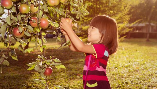 Η βιοποικιλότητά μας, η τροφή μας, η υγεία μας